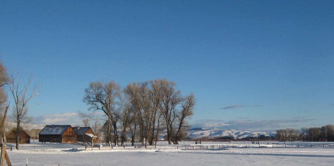 Snow-IMG_1784-crop