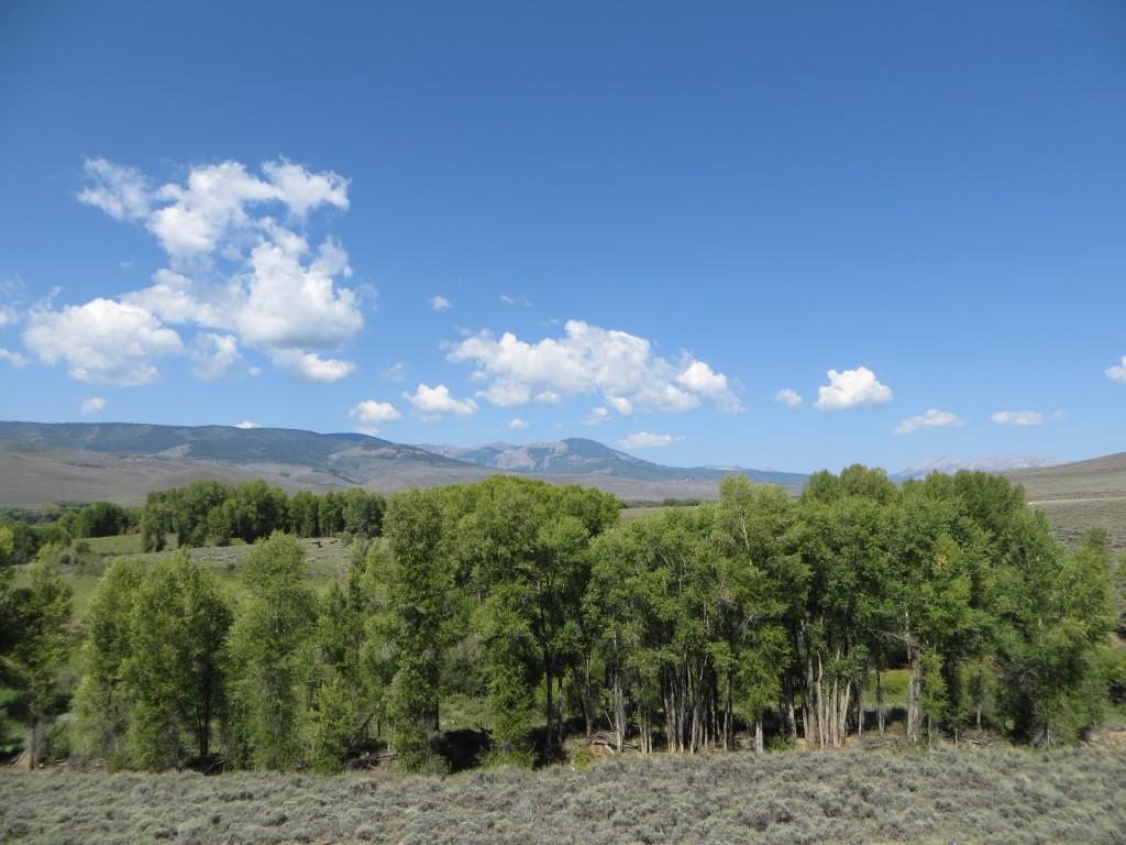 Summer-Mtn-View