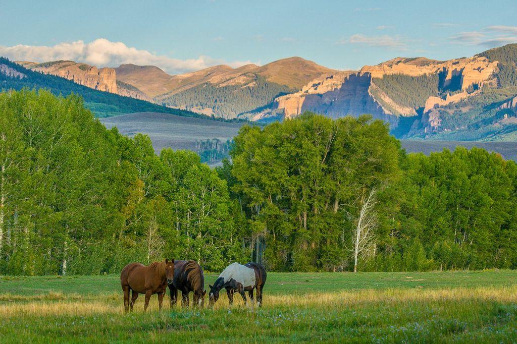 Horses-View